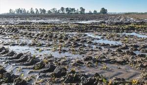 Terre avec eau stagnante, conséquence du compactage
